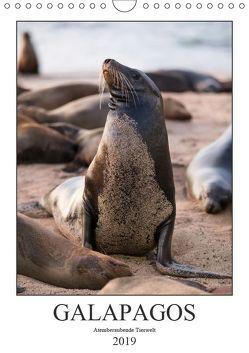Galapagos – Atemberaubende Tierwelt (Wandkalender 2019 DIN A4 hoch) von Dobrindt,  Jeanette