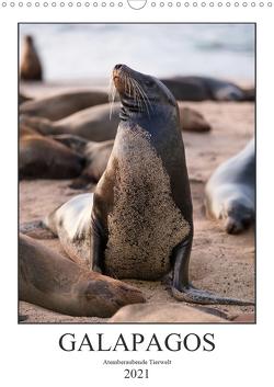 Galapagos – Atemberaubende Tierwelt (Wandkalender 2021 DIN A3 hoch) von Dobrindt,  Jeanette