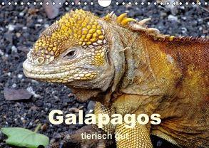 Galápagos – tierisch gut (Wandkalender 2018 DIN A4 quer) von Rudolf Blank,  Dr.