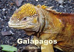 Galápagos – tierisch gut (Wandkalender 2019 DIN A2 quer) von Rudolf Blank,  Dr.