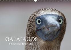 Galapagos (Wandkalender 2018 DIN A3 quer) von Weise,  Ralf