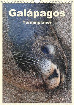 Galápagos (Wandkalender 2019 DIN A4 hoch) von Rudolf Blank,  Dr.