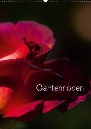 Gartenrosen (Wandkalender 2018 DIN A2 hoch) von Renken,  Erwin