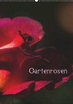 Gartenrosen (Wandkalender 2019 DIN A2 hoch) von Renken,  Erwin