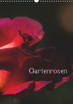 Gartenrosen (Wandkalender 2019 DIN A3 hoch) von Renken,  Erwin