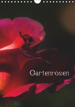 Gartenrosen (Wandkalender 2019 DIN A4 hoch) von Renken,  Erwin