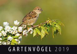 Gartenvögel 2019 von Quelle & Meyer Verlag