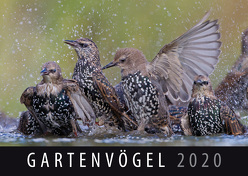 Gartenvögel 2020 von Quelle & Meyer Verlag