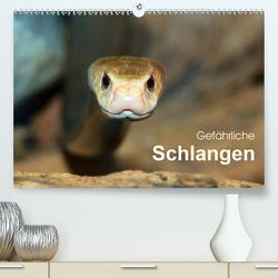 Gefährliche Schlangen (Premium, hochwertiger DIN A2 Wandkalender 2021, Kunstdruck in Hochglanz) von Herzog,  Michael