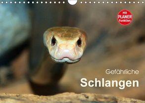 Gefährliche Schlangen (Wandkalender 2018 DIN A4 quer) von Herzog,  Michael