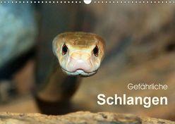 Gefährliche Schlangen (Wandkalender 2019 DIN A3 quer) von Herzog,  Michael