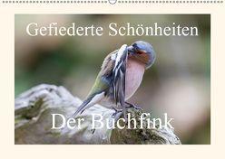 Gefiederte Schönheiten – Der Buchfink (Wandkalender 2019 DIN A2 quer) von Poetsch,  Rolf