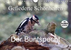 Gefiederte Schönheiten – Der Buntspecht (Wandkalender 2018 DIN A4 quer) von Poetsch,  Rolf