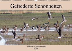 Gefiederte Schönheiten – Wildgänse in Norddeutschland (Wandkalender 2019 DIN A2 quer) von Poetsch,  Rolf