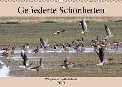 Gefiederte Schönheiten – Wildgänse in Norddeutschland (Wandkalender 2019 DIN A3 quer) von Poetsch,  Rolf