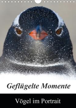 Geflügelte Momente – Vögel im Portrait (Wandkalender 2021 DIN A4 hoch) von Schlögl,  Brigitte