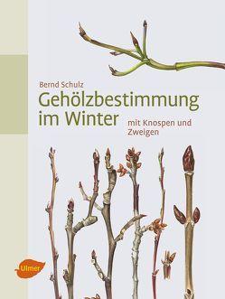 Gehölzbestimmung im Winter von Schulz,  Bernd