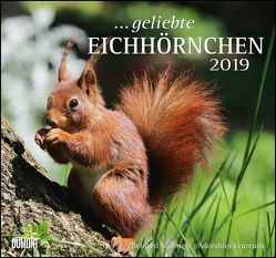 … geliebte Eichhörnchen 2019 – DuMont Wandkalender – mit den wichtigsten Feiertagen – Format 38,0 x 35,5 cm von DUMONT Kalenderverlag