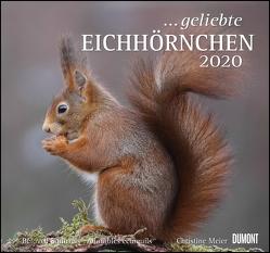 … geliebte Eichhörnchen 2020 – DuMont Wandkalender – mit den wichtigsten Feiertagen – Format 38,0 x 35,5 cm von DUMONT Kalenderverlag, Meier,  Christine