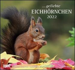 … geliebte Eichhörnchen 2022 – DUMONT Wandkalender – mit den wichtigsten Feiertagen – Format 38,0 x 35,5 cm von Christine,  Meier