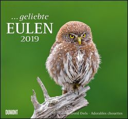 Geliebte Eulen 2019 – DuMont Wandkalender – mit den wichtigsten Feiertagen – Format 38,0 x 35,5 cm von DUMONT Kalenderverlag, Fotografen,  verschiedenen