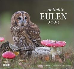 … geliebte Eulen 2020 – DuMont Wandkalender – mit den wichtigsten Feiertagen – Format 38,0 x 35,5 cm von DUMONT Kalenderverlag, Fotografen,  verschiedenen