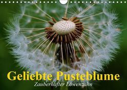 Geliebte Pusteblume. Zauberhafter Löwenzahn (Wandkalender 2019 DIN A4 quer) von Stanzer,  Elisabeth