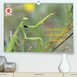GEOclick Lernkalender: Insekten (Premium, hochwertiger DIN A2 Wandkalender 2020, Kunstdruck in Hochglanz) von Feske,  Klaus