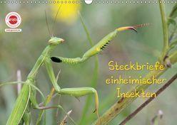 GEOclick Lernkalender: Insekten (Wandkalender 2019 DIN A3 quer) von Feske,  Klaus