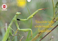 GEOclick Lernkalender: Insekten (Wandkalender 2019 DIN A4 quer) von Feske,  Klaus