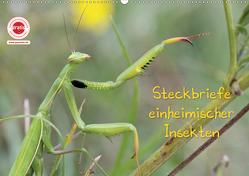 GEOclick Lernkalender: Insekten (Wandkalender 2020 DIN A2 quer) von Feske,  Klaus