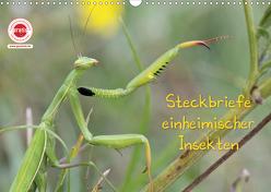 GEOclick Lernkalender: Insekten (Wandkalender 2020 DIN A3 quer) von Feske,  Klaus
