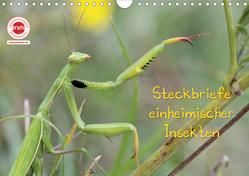 GEOclick Lernkalender: Insekten (Wandkalender 2020 DIN A4 quer) von Feske,  Klaus