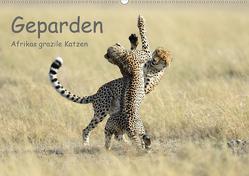 Geparden – Afrikas grazile Katzen (Wandkalender 2021 DIN A2 quer) von Jürs,  Thorsten