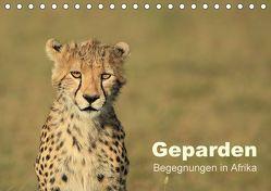 Geparden – Begegnungen in Afrika (Tischkalender 2018 DIN A5 quer) von Herzog,  Michael