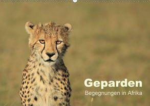 Geparden – Begegnungen in Afrika (Wandkalender 2018 DIN A2 quer) von Herzog,  Michael