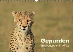 Geparden – Begegnungen in Afrika (Wandkalender 2018 DIN A3 quer) von Herzog,  Michael