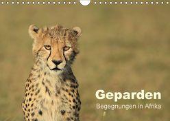 Geparden – Begegnungen in Afrika (Wandkalender 2018 DIN A4 quer) von Herzog,  Michael