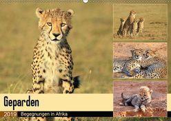 Geparden – Begegnungen in Afrika (Wandkalender 2019 DIN A2 quer) von Herzog,  Michael