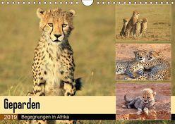 Geparden – Begegnungen in Afrika (Wandkalender 2019 DIN A4 quer) von Herzog,  Michael