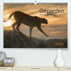Geparden. Die eleganten Katzen. (Premium, hochwertiger DIN A2 Wandkalender 2020, Kunstdruck in Hochglanz) von Koch,  Lucyna