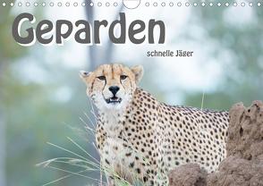 Geparden – schnelle Jäger (Wandkalender 2020 DIN A4 quer) von Styppa,  Robert