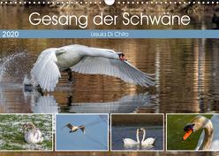 Gesang der Schwäne (Wandkalender 2020 DIN A3 quer) von Di Chito,  Ursula