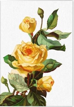 Geschichte der Rose Klappkarte Motiv Lichtkönigin Lucia