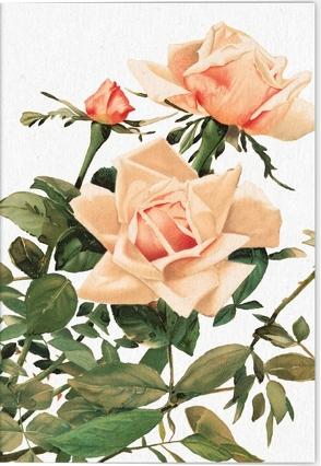 Geschichte der Rose Klappkarte Motiv Rosengarten