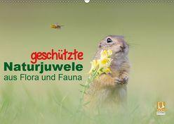 geschützt Naturjuwele aus Flora und Fauna (Wandkalender 2019 DIN A2 quer) von Petzl,  Perdita