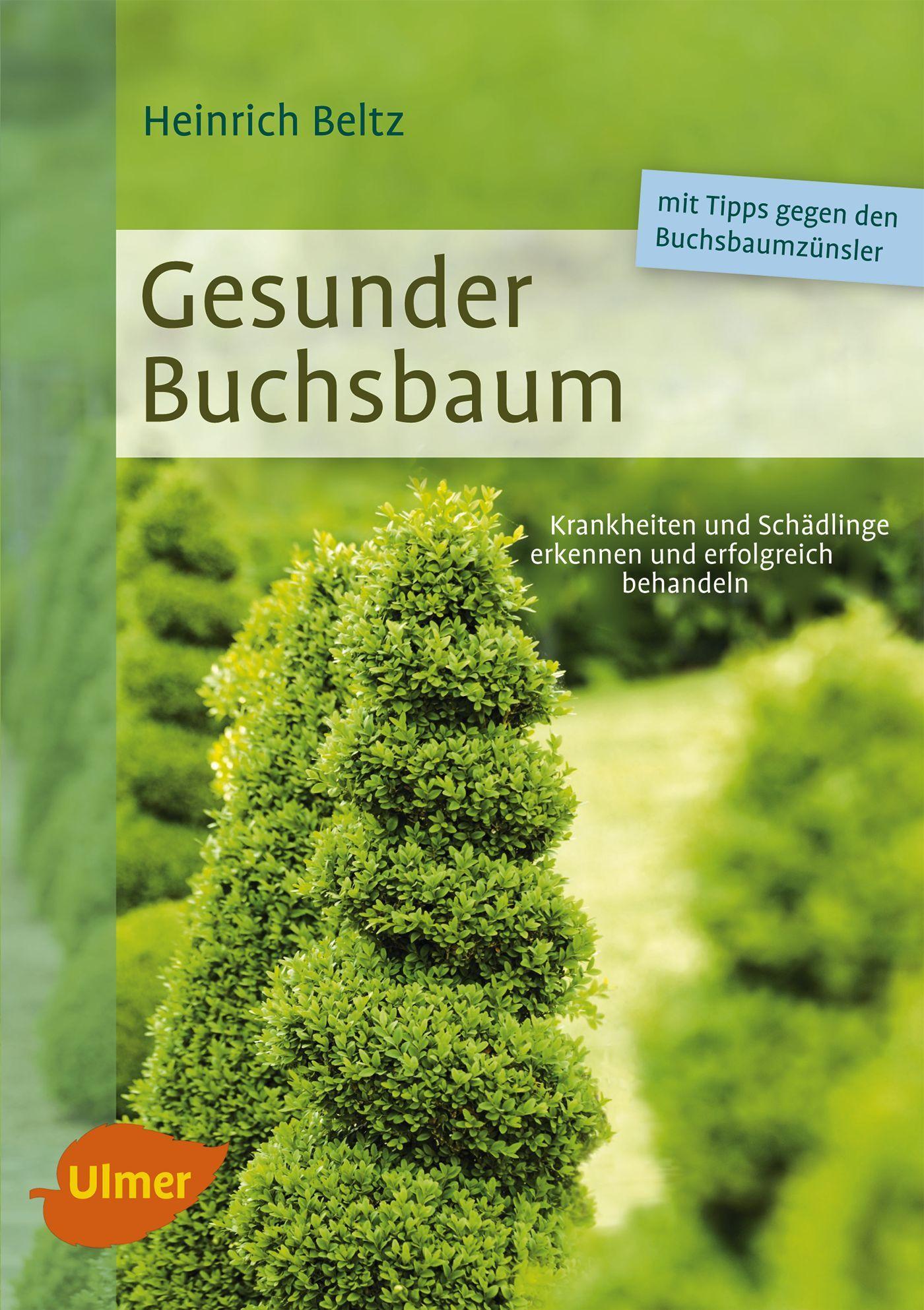 buchsbaum pflege buchs gew hnlicher buchsbaum kugel. Black Bedroom Furniture Sets. Home Design Ideas