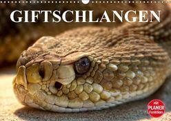 Giftschlangen (Wandkalender 2019 DIN A3 quer) von Stanzer,  Elisabeth
