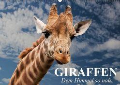 Giraffen. Dem Himmel so nah (Wandkalender 2019 DIN A2 quer) von Stanzer,  Elisabeth