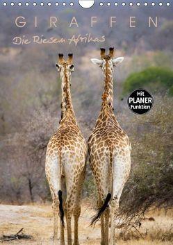 Giraffen – Die Riesen Afrikas (Wandkalender 2019 DIN A4 hoch) von Pavlowsky Photography,  Markus